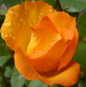 Что значит имя? Роза пахнет розой, Хоть розой назови ее, хоть нет.